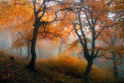 ***Обаяние осени Осень туман деревья листва