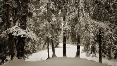 У озера Зима лес озеро