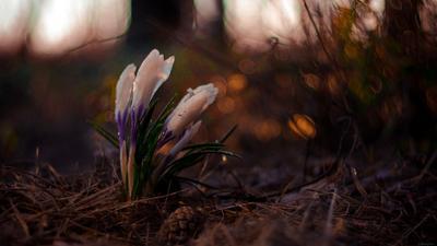 Пробуждение весна цветок макро