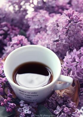 Сиреневый кофе кофе сирень
