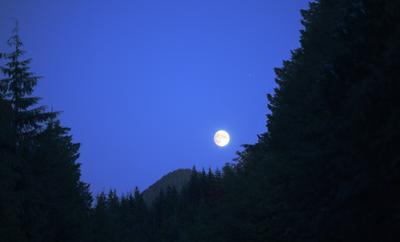 Луна Охотника Луна ночь