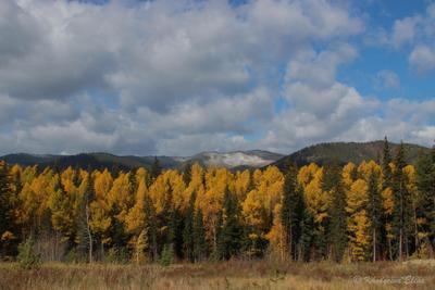 осень.. бурятия пейзаж осень
