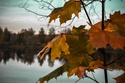 Унылая пора...очей очарование осень природа листья клен
