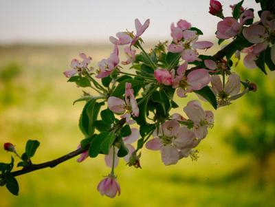 *** Цветы макро флора приода