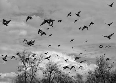 Птицы Весна пейзаж природа деревья река птицы