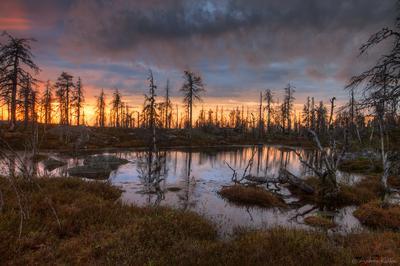 Карельский закат Карелия Воттоваара закат лес озеро болото дерево камни вода небо