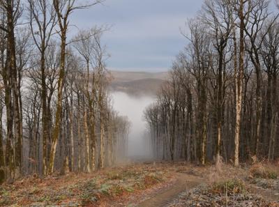 Туманное утро в горах... Утро горы туман Кавказ