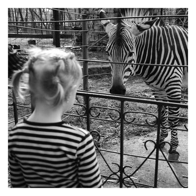 Свои девочка зебра