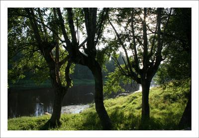 Танцы втроем река дерево странные танцы