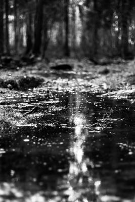 Гнетущий лес лес пейзаж чб