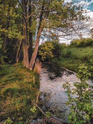 Пруд пейзаж природа деревья река небо фото