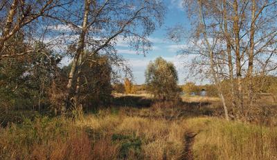 Воскресная прогулка. осень пейзаж