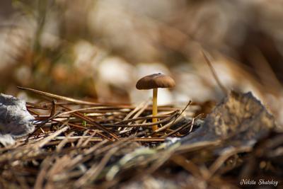 *** природа гриб лес