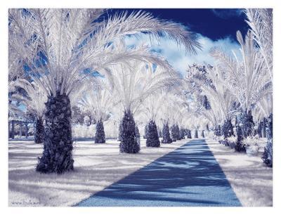Пальмовая аллея infrared, Корсика
