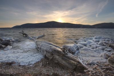 Ледяной крокодил волга река зима осень вода закат холод мороз дерево бревно крокодил