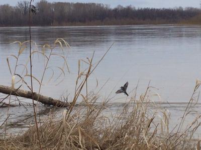 ***весенняя жизнь во время паводка река разлив половодье полет