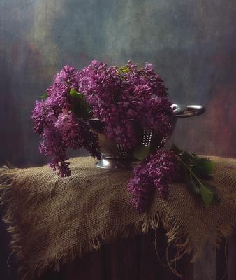 сирень... натюрморт цветы сирень