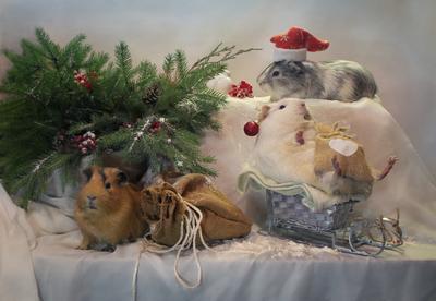 Новогодние хлопоты животные питомцы морские свинки композиция новый год елка украшения