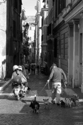*** Рим Италия каникулы Rome Italy forever собака