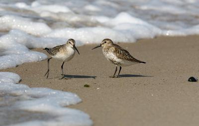 Правильный подход Лето, Балтийское море, Куршкая коса, волны, море, пена, птицы, любовь, он, она, семья, песок, дикая природа