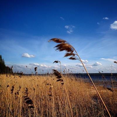 *** Природа небо лето