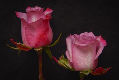 Портрет сестёр Розы