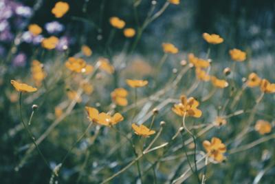 *** лето цветы природа