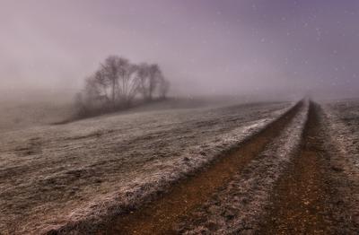*начало* дорога туман дерево снег