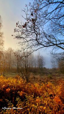 Опавшие листья Осень туман озеро красные листья