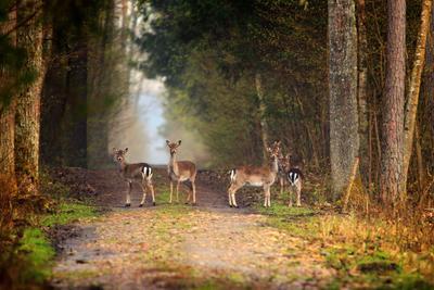 В гостях у сказки ... природа зверь олень свобода лес