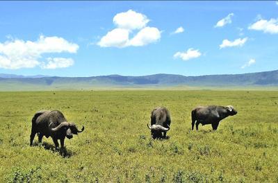 Танзания. Три богатыря.