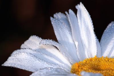Про росу и первые утренние лучи солнца утро, роса, макро, солнце, лето, тепло, хорошо