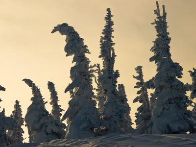 frozen елки замерзли