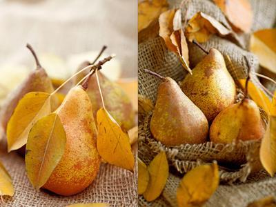 Дыхание осени осень, груши, фрукты, slyadnev
