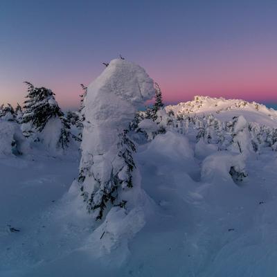 Снежные энты Зима Таганай Южный Урал