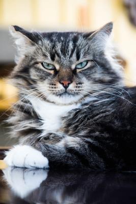 Марсель кот