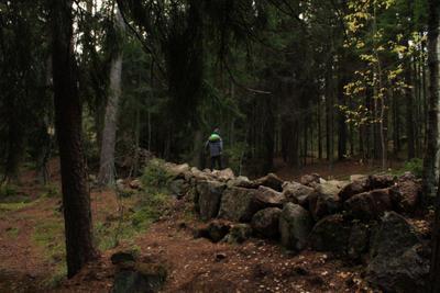 Парк Монрепо Монрепо парк осень Выборг ЛО Твердыш заповедник Парк