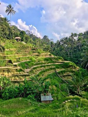 Рисовые террасы на Бали, Индонезия Бали путешествие пейзаж