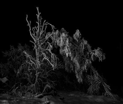 Иней снег вечер дерево иней