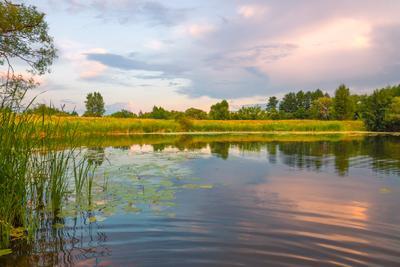 Июльский теплый вечер ... Полезем в реку?