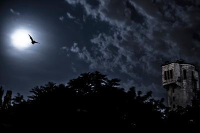 Ужас летящий на крыльях ночи :) ночь летучая мышь