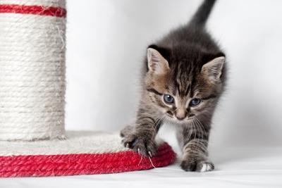 *** котёнок