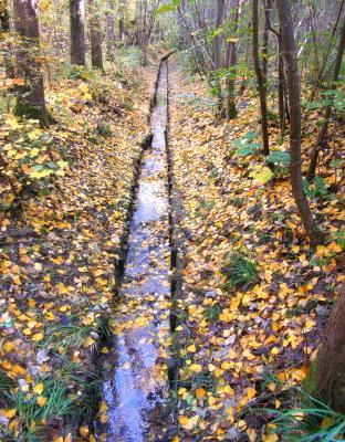 Осенний путь осень