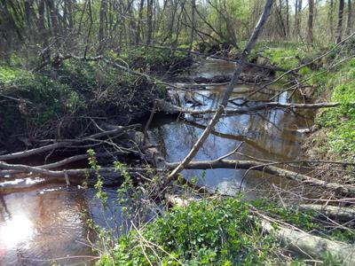 Бобровая речка лесная река бобровая плотина весна