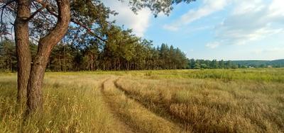 Пейзаж Лето дорога сосны природа