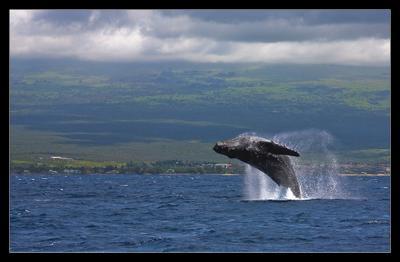 Сальто Hawaii, кит