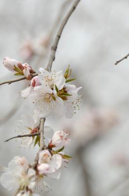 Иероглиф Весна Природа, весна, Пекин
