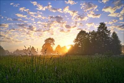 Утро деревня тверская область утро поле восход