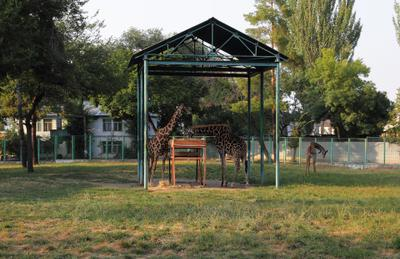 *** жираф зоопарк зверь природа