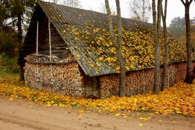 Пришла осень осень дом золото листьев